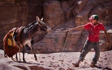 9 Donkey Petra