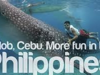 Close Encounter With Cebu Whale Shark