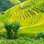 Lao Chai Village Tour