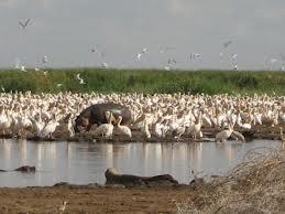 Tanzania Northern Circuit Safari Photos