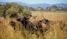 Safari Tourism Uganda 5
