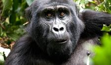 Safari Tourism Uganda 7