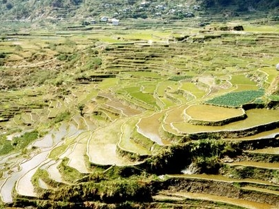 Rice Terraces, Sagada