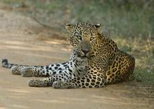 Yala National Park Sri Lanka 7