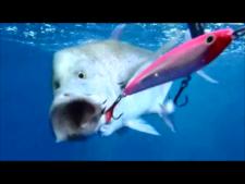 Bluefin Trav Lure