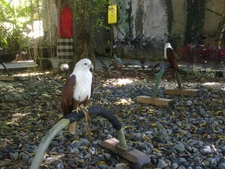 Bali Safari Animal