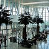 New Check In Counter Sultan Syarif Kasim II Airport