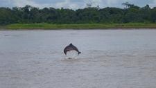 Dolphin Profile2