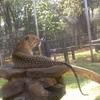 Leopard  At Nairobi Animal Orphanage