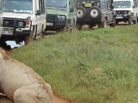 Ernest Magic Tours & Safaris, Ngorongoro