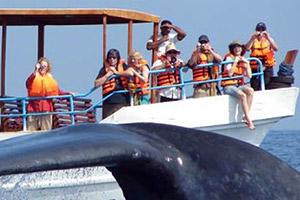 Whale Mirissa Watching