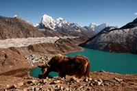 Mountain World Treks And Expedition