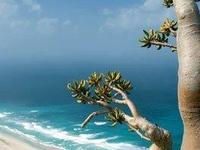 Bottle Tree In Socotra Island
