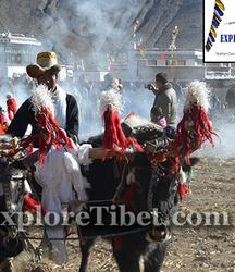 Ploughing Festival In Tibetan Village