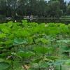 Beijing Botanical 5