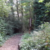 Path In The Southern End Of Belsize Wood