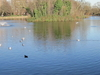 Clissold Park's Lake