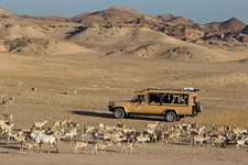 Wildlife Drive @ Sir Baniyas Island