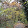 Downham Woodland Walk