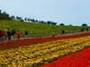 Flower  Field  O C T  East