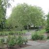 Sayes Court Park