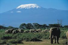 Amboseli Camping