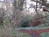 Barnsbury Wood
