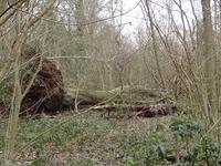Ruffett and Big Woods