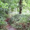 Narrow Path In Crane Park Island
