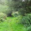 Path In Crane Park Island