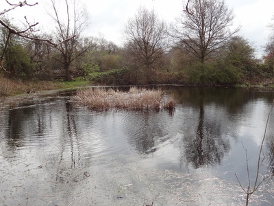 Cranmer Green Pond