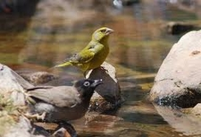 Danaa Reserve / Wild Life