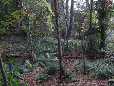 Dulwich Upper Wood