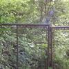 Edith Gardens