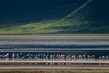 Flamingoes Against A Backdrop Of The Vegetation Covered Ridges At The Edge Of The Ngorongoro Crater
