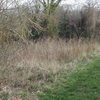 Foxley Wood, Purley