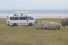 Game Viewing Lake Nakuru