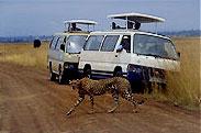 Game Viewing From Safari Van