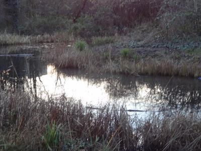 Gillespie Park Main Pond