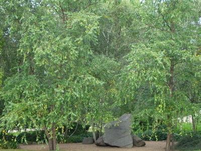 The Hyde Park Holocaust Memorial