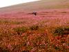 Huasco  Desierto  Florido
