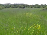 Islip Manor Meadows