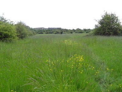 Islip Manor Meadows