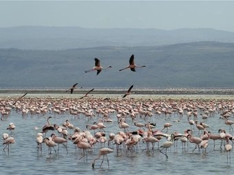 Lake Nakuru Day Trip Excursion