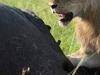 African Comrade Safaris Ltd