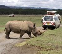 Masai Mara Game Drive Viewing