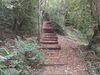Old Park Wood Steps