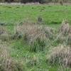 Parsloes Park Squatts