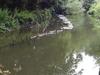 River Crane In Crane Park