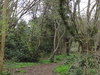 Roundshaw Downs Woodland